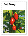 Goji Berry  Powerful Antioxidant