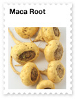 Maca Root – Adaptogen