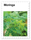 Moringa  Nutrient-rich Superfood with Phytonutrients
