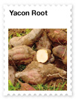 Yacon Root  Prebiotic